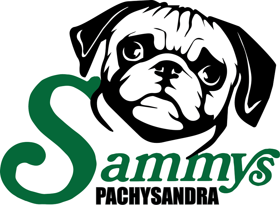 Sammy's Pachysandra Logo